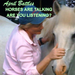 Horses are Talking are you Listening DVD