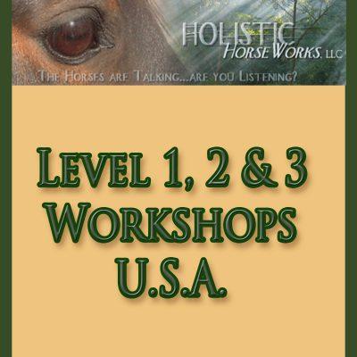 Workshops - USA